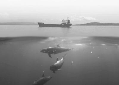 Modelització de la propagació acústica subaquàtica